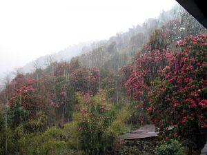Downpour at Ghorepani.
