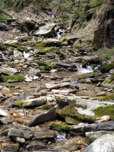 Stream near trail.