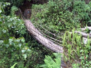 Another bridge in a lush, green forest.