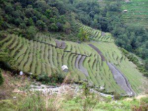 Terraced farmland.