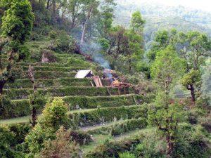 A primitive working sawmill.